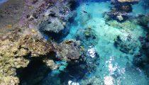 Voyage au fond l'eau à Montpellier