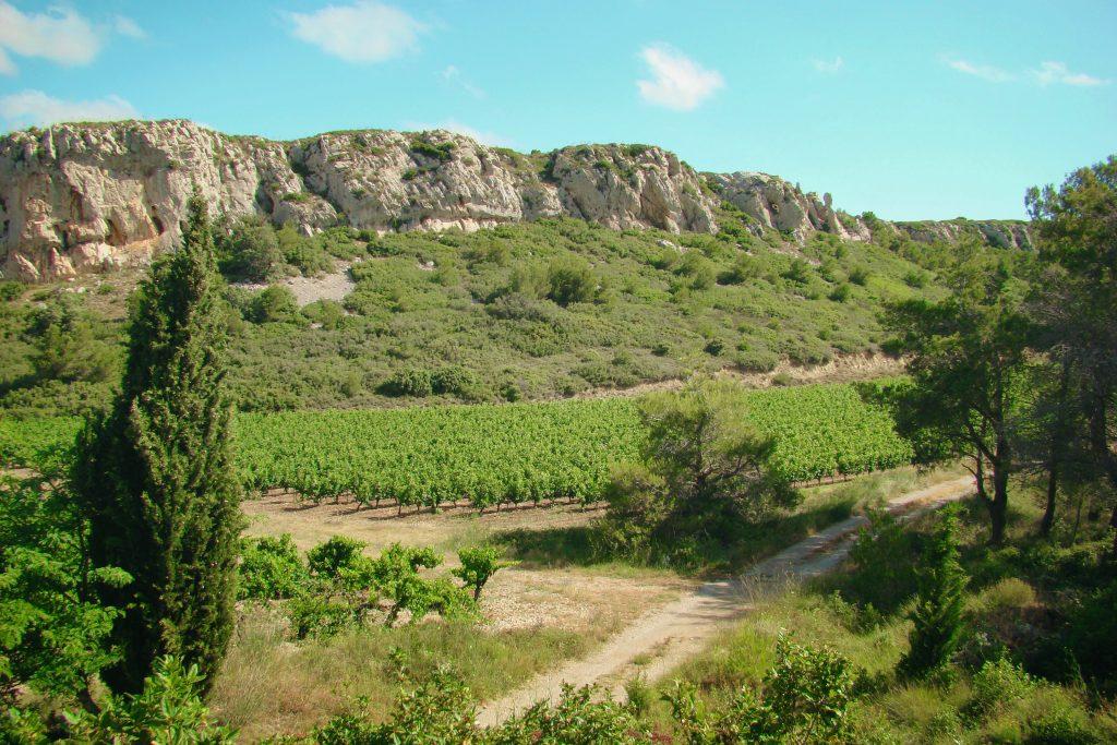 Vigne,La clape,Aude